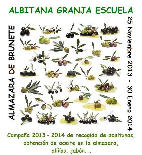 Campaña 2013-2014 recogida de aceitunas y obtención de aceite en la almazara de  Albitana Granja Escuela, Brunete