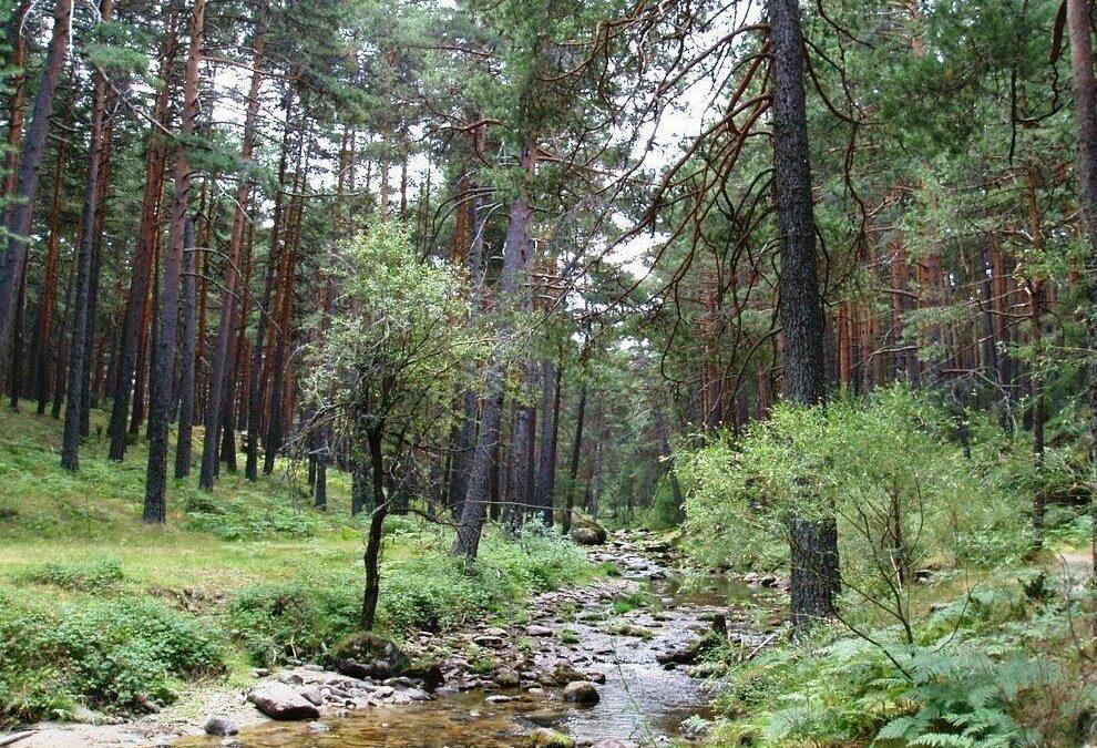 Miercoles 15 de Julio iremos de excursión  al río Eresma