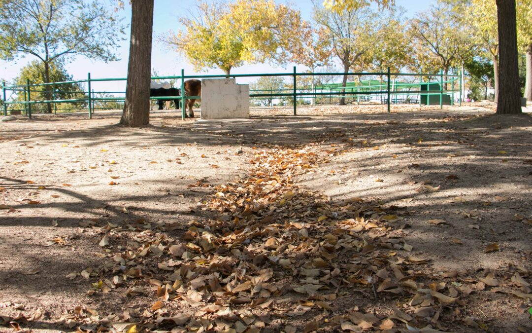 El otoño – Granja escuela Albitana, Brunete (Madrid)
