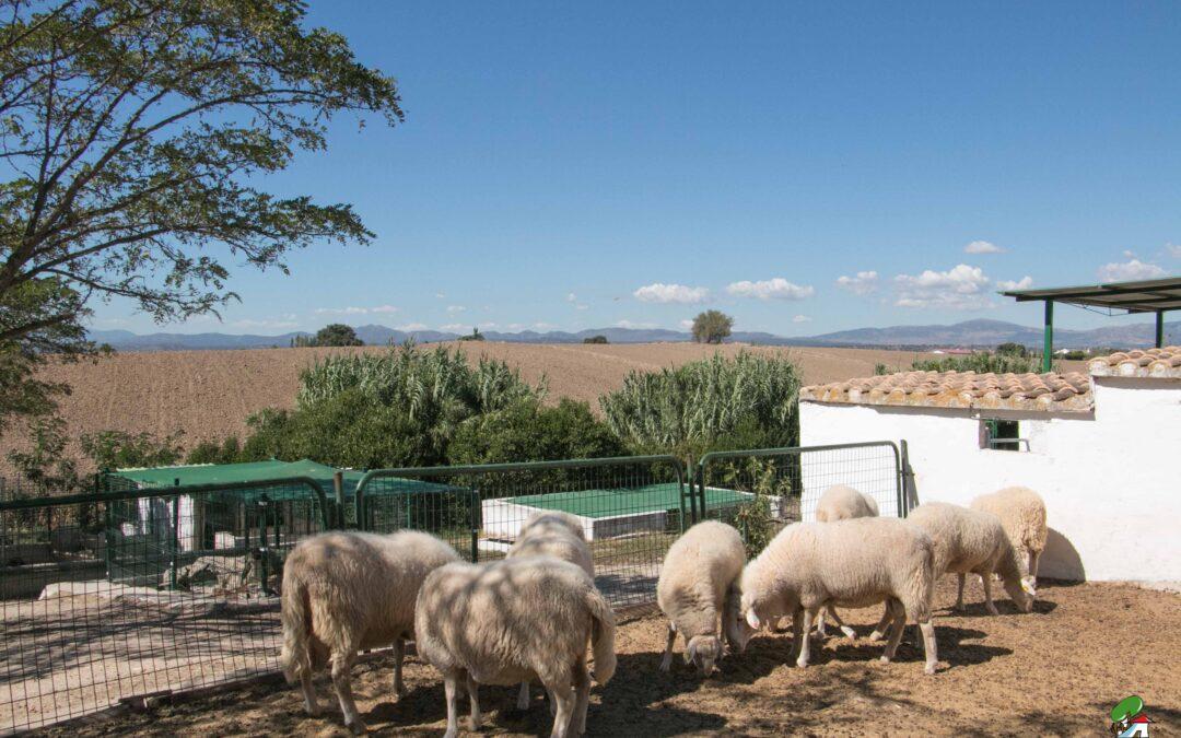 El proceso de la lana – Granja escuela Albitana