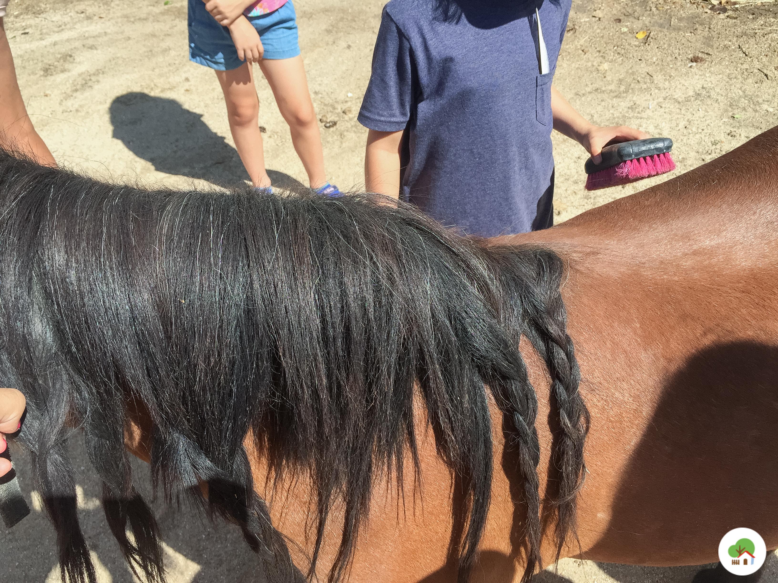 niños peinando pony campamento albitana