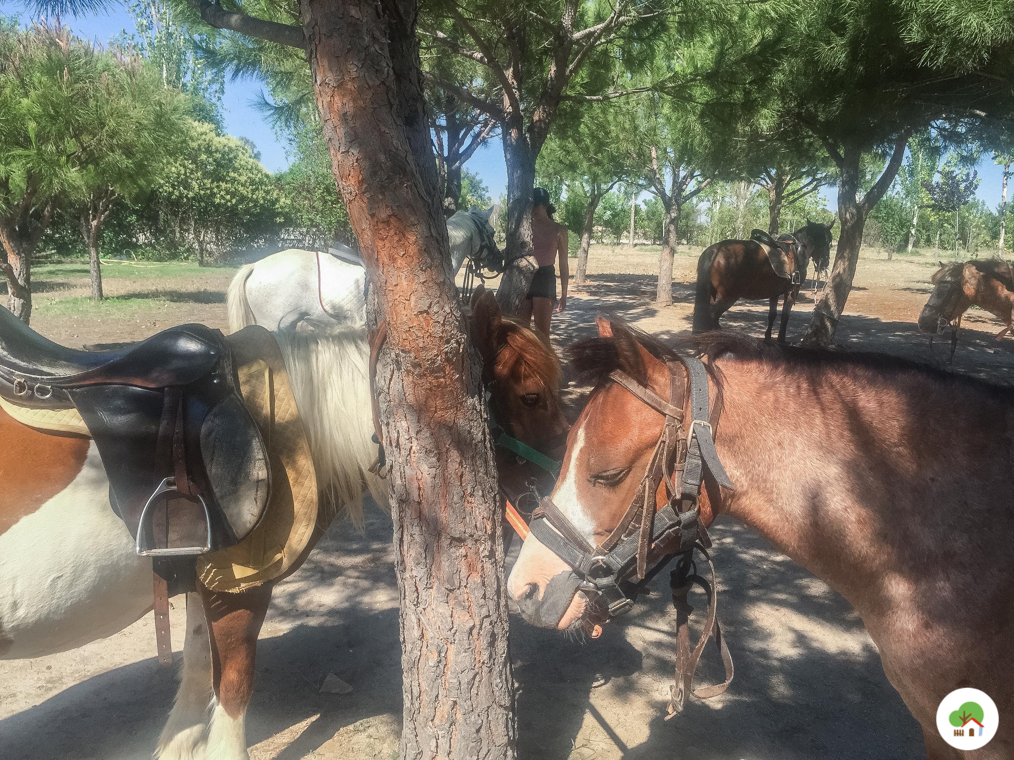caballos y ponys en campamento granja albitana