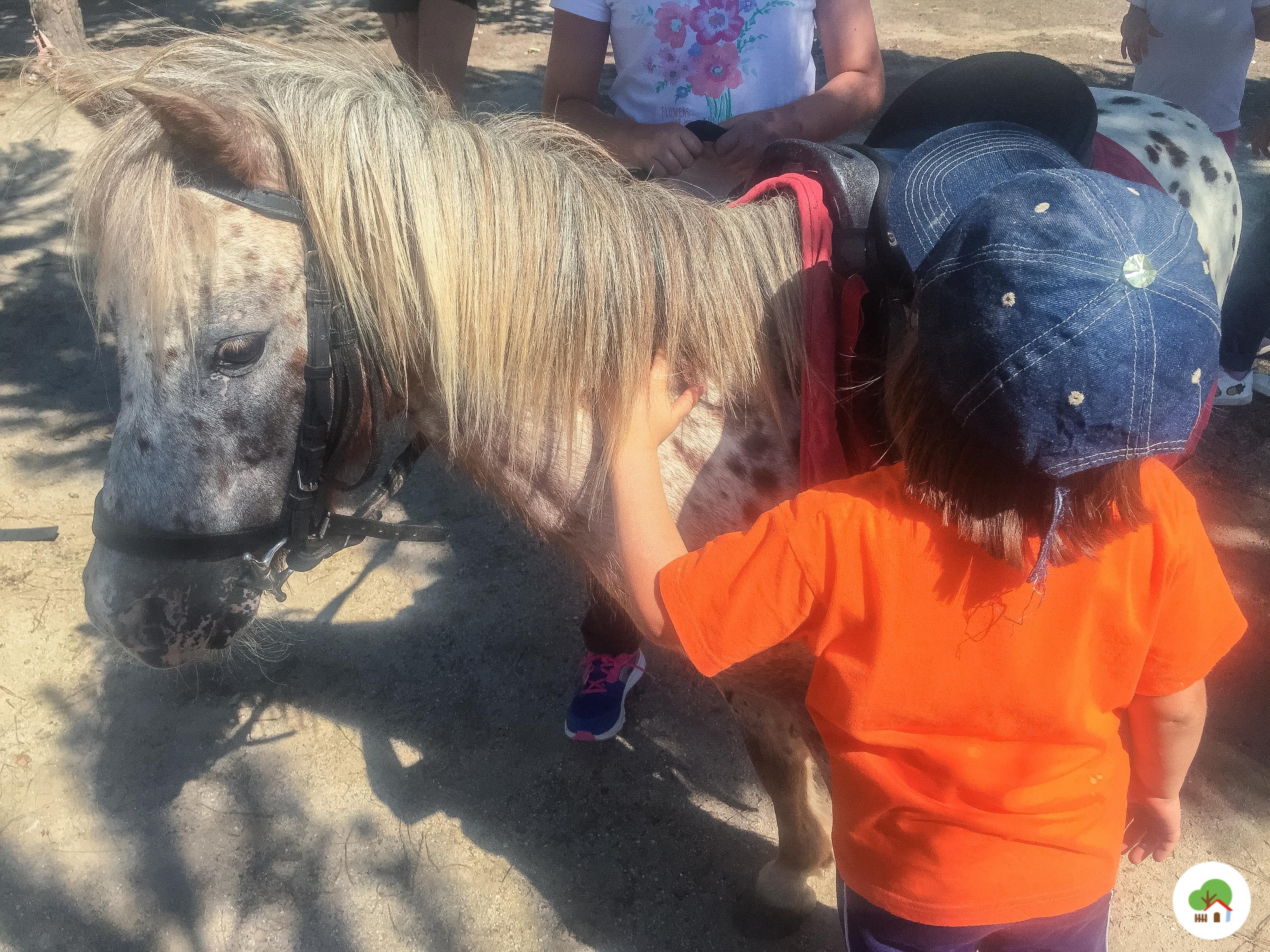 niña acariciando caballo campamento albitana