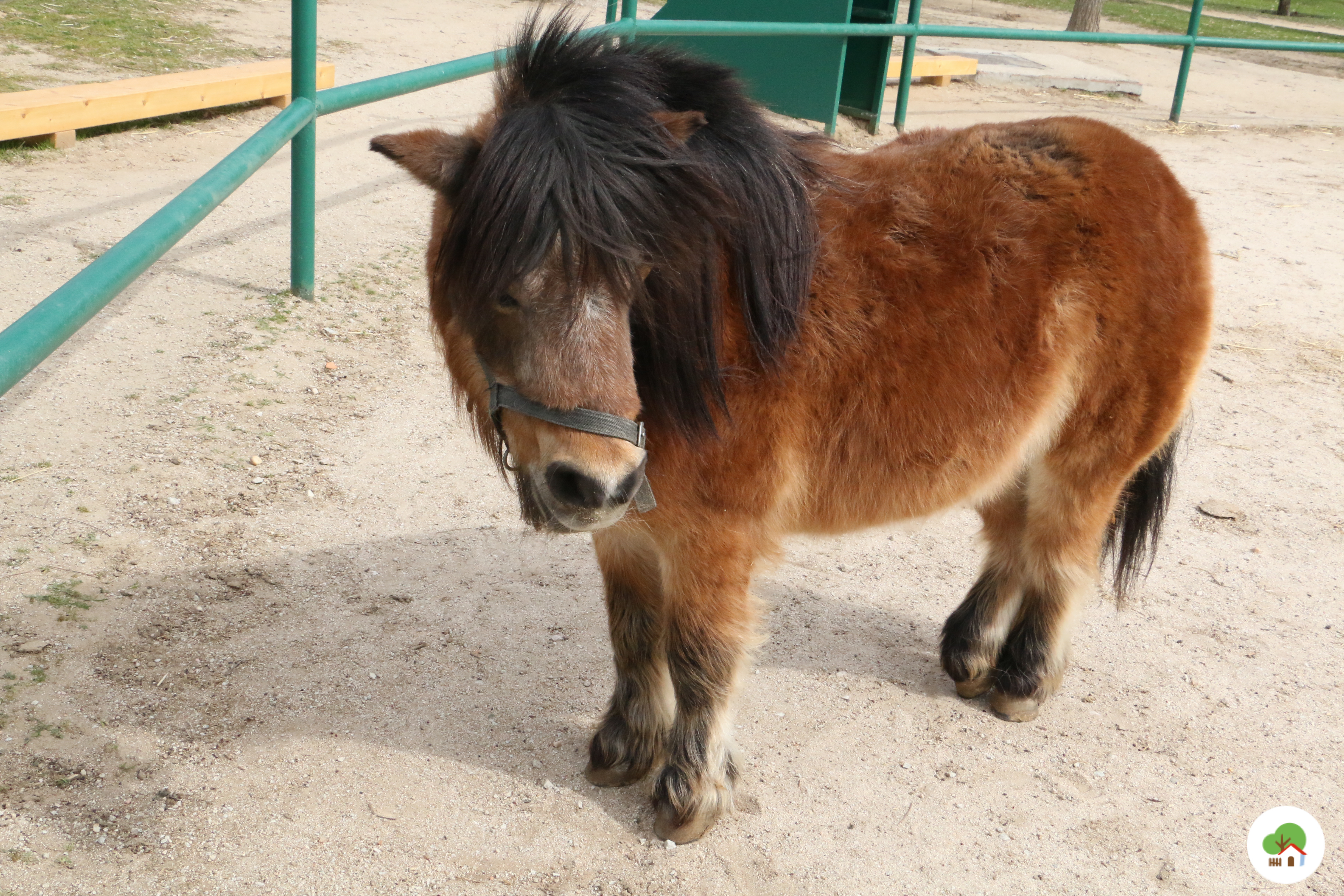 pony en campamento granja escuela albitana