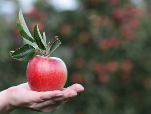 apple-2788585_1280