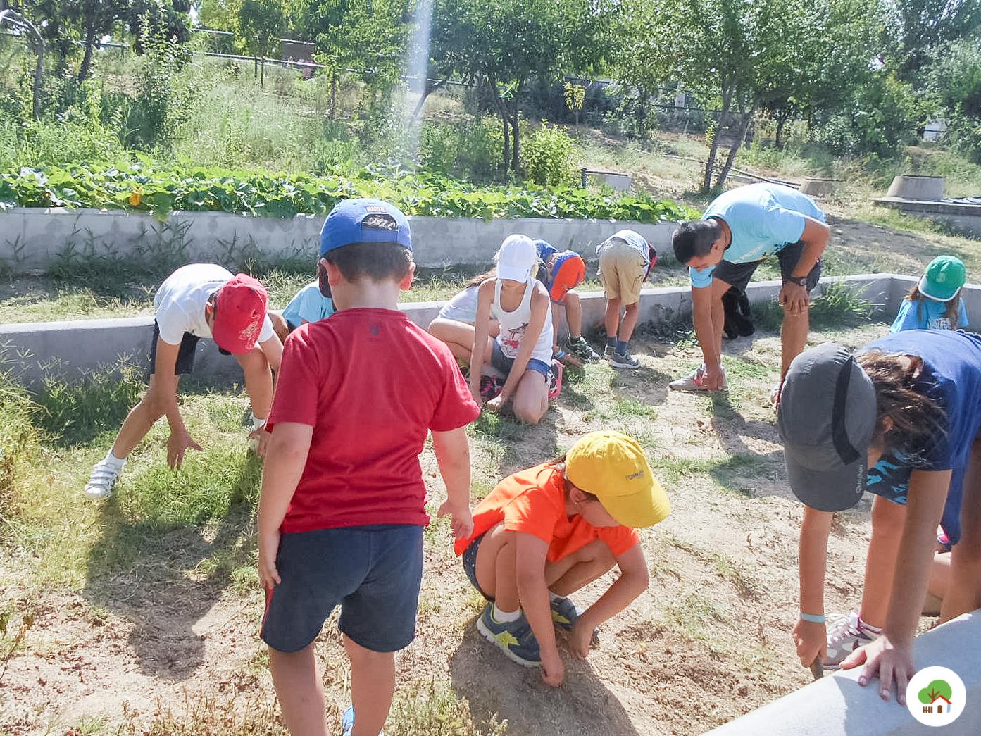 Campamento en Madrid, granja escuela Albitana
