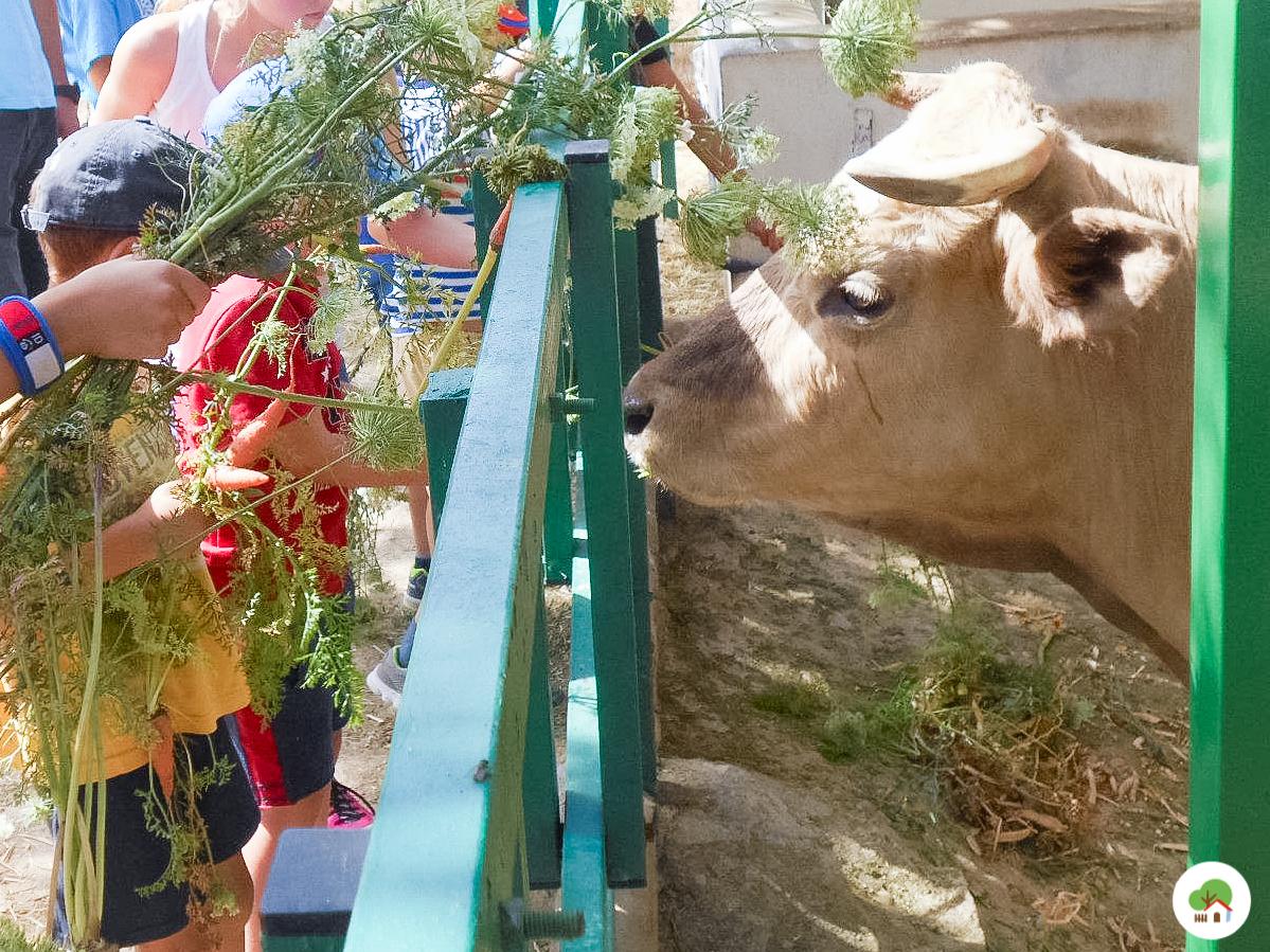 Campamento en Madrid, animales, Albitana