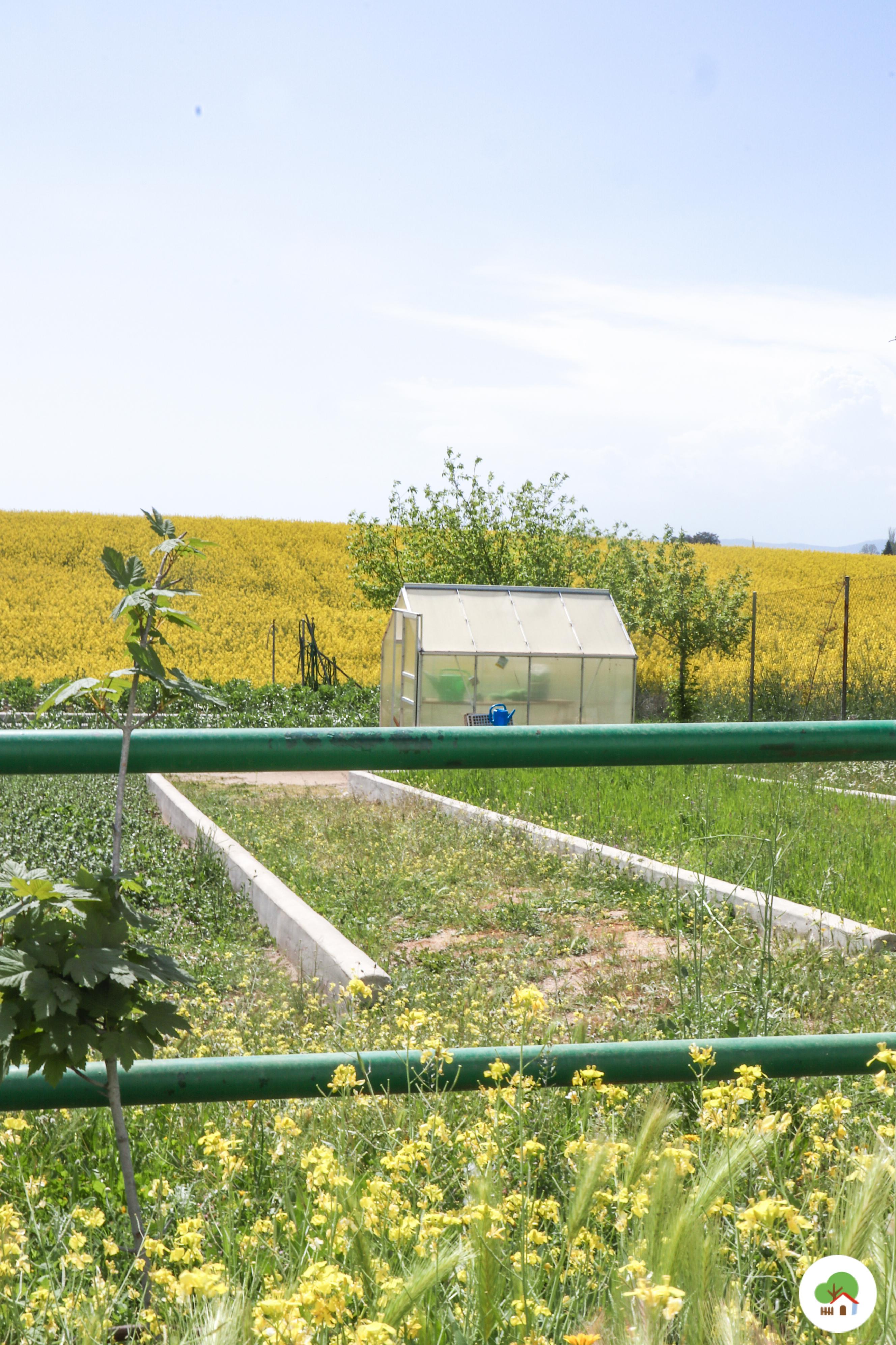 Invernadero en el huerto, Albitana