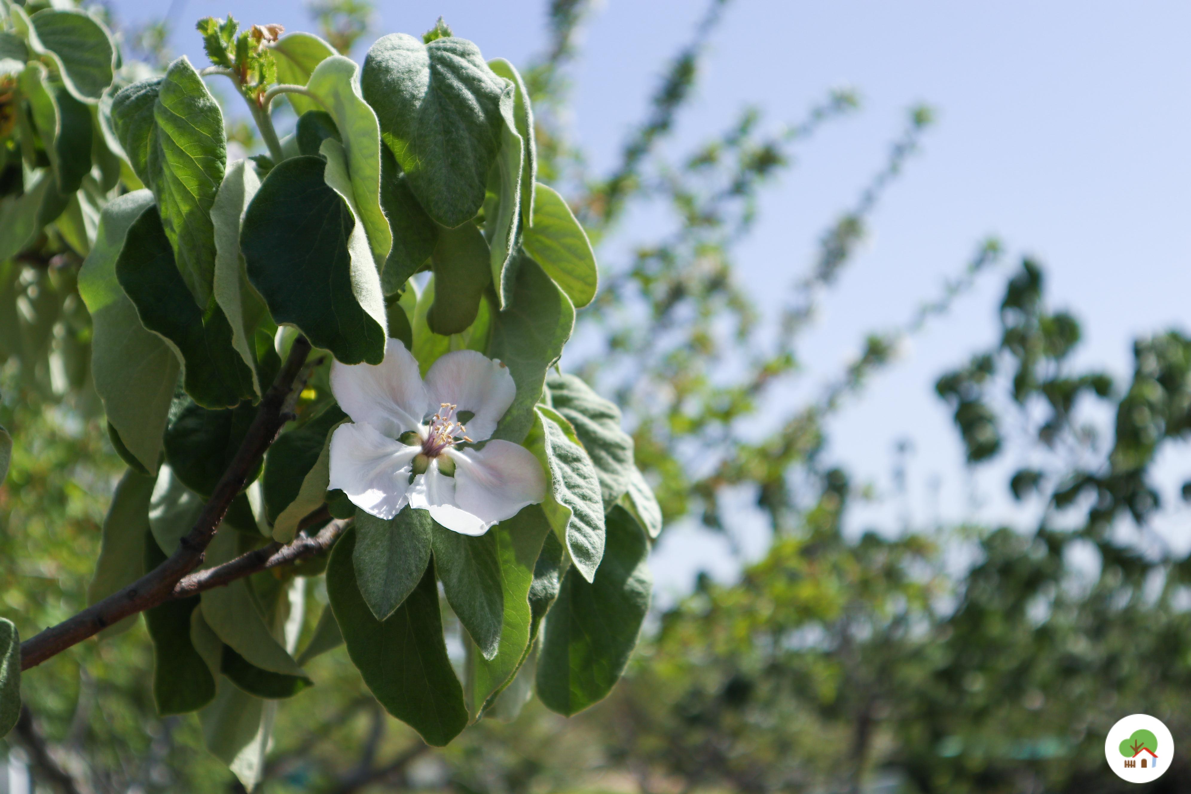 Frutales en el huerto, Albitana