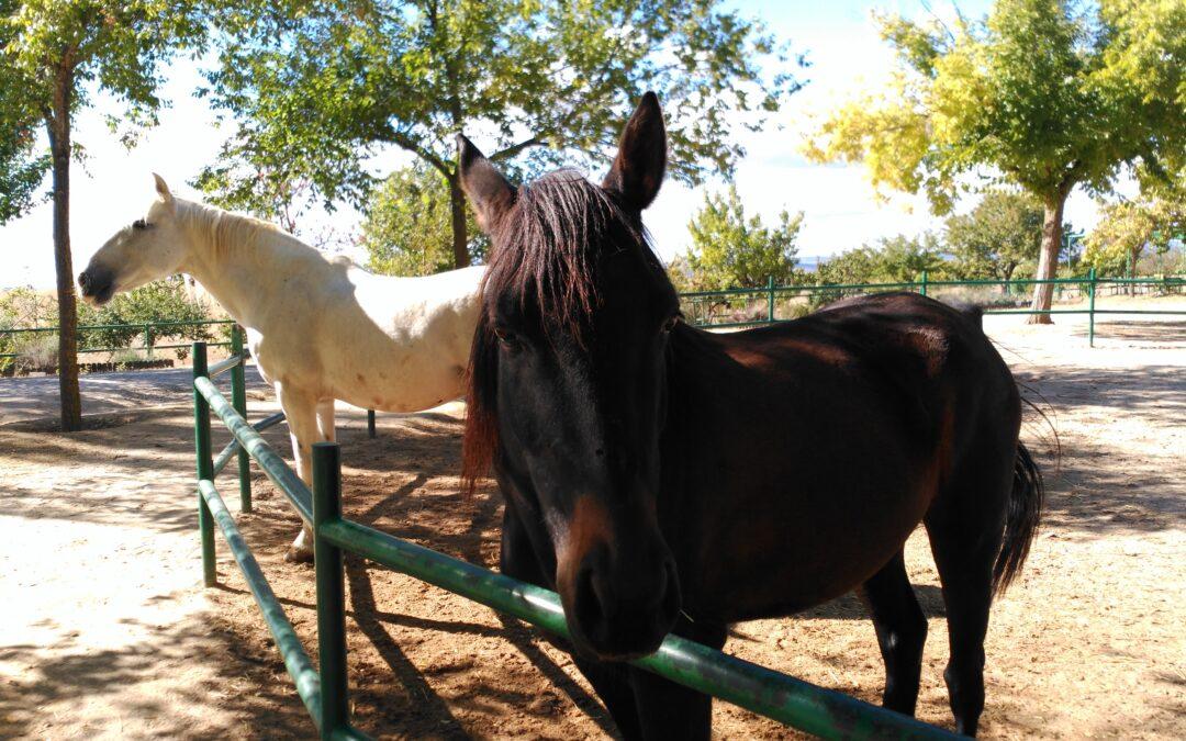 Hoy han llegado a Albitana dos nuevos amigos, Imprevisto y Torero