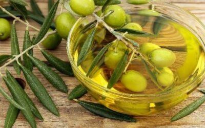 ¿Vuestros alumnos ya conocen el proceso de la obtención del aceite de oliva en ALMAZARA TRADICIONAL?